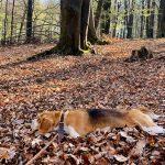 paris v lese
