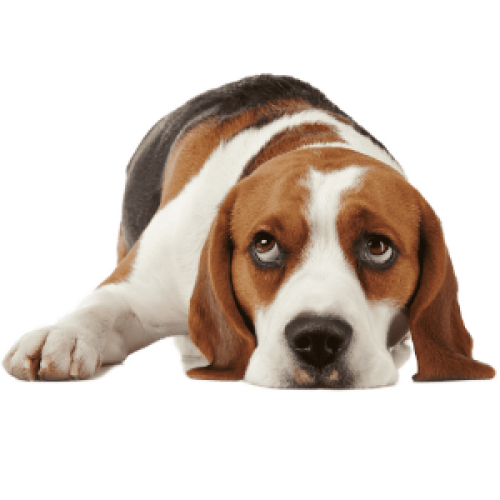 footer-dog-free-img-2